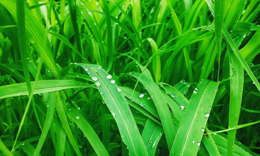 Green Color Leaf Nature One Animal Insect Close-up Animals In The Wild Focus On Foreground No People Outdoors Plant Day Grass Animal Themes Animal Wildlife Backgrounds Freshness