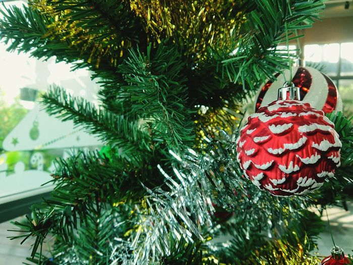 Close-up of christmas tree