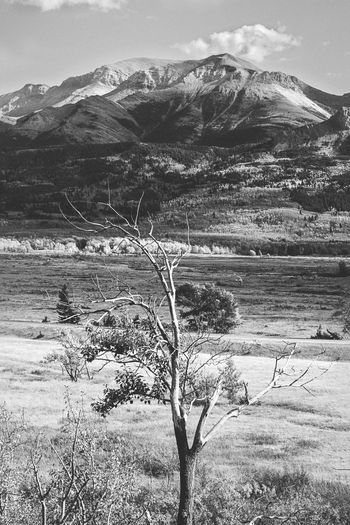 Few days spent in Waterton Lakes National Park of Alberta. One of my favourite park in Canada, even more beautiful under the fall's colours. Alberta Autumn Nature Tree Waterton Lakes National Park Waterton National Park Adventure Beauty In Nature Black And White Blackandwhite Bnw Canada Day Environment Fall Landscape Mountain Nature Outdoors Plant Roadtrip Scenics - Nature Sky Tranquility Valley