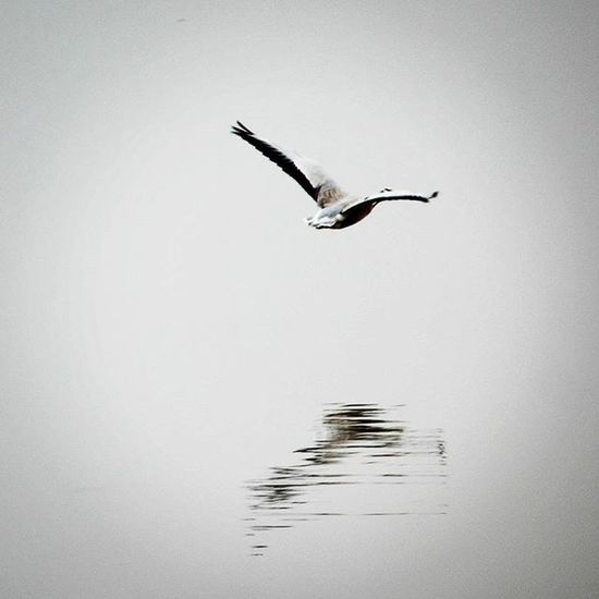 It takes everything to be wise and she'd rather stay a fool. No People Nature Bird Bird Photography Black And White Photography Sea Sea And Bird Shadow Wings Sky Water Water Reflection