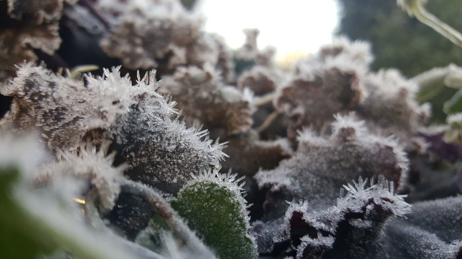 Nature Plant Day Winter No People Snow Cold Temperature Growth Beauty In Nature Outdoors Close-up Freshness