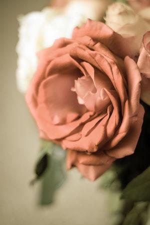 Birthday Roses Pink Roses