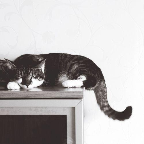 My Pet Jónsi  Cat Sleeping Cat Monochrome Photography