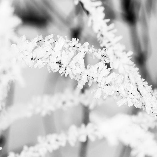 Bolu  Abant Kar Kış gölcük winter cold holidays snow rain snowing blizzard snowflakes wintertime staywarm cloudy instawinter instagood holidayseason photooftheday season seasons