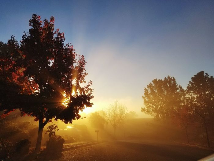 Foggy Morning EyeEm Nature Lover Magical Moments Morning Sky Sunrise_Collection Tree Sunset Sky Landscape Shining Silhouette Dawn Sunrise - Dawn Orange Color Sunbeam Sunrise Sun Streaming