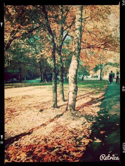 Осень Hi! Hello World First Eyeem Photo