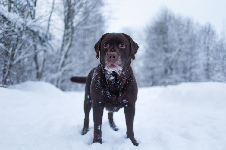 Portrait of dog standing on snow