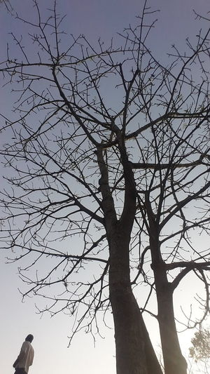 Noleaves Onlybranch Branches Bigtree Wood Giant Haunted Haunted Trees Hauntedtree OneMan Singleman The Essence Of Summer