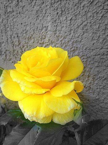 Perks of being a wallflower Wallflower EyeEm Nature Lover Flowerporn Flower Collection The Perks Of Being A Wallflower