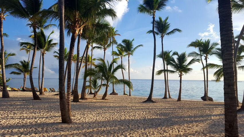 Sea Beach Palm Tree Tree Water Sky Nature Horizon Over Water Sunlight Outdoors Tropical Climate Vacations No People Beauty In Nature Landscape Scenics Postcard Day