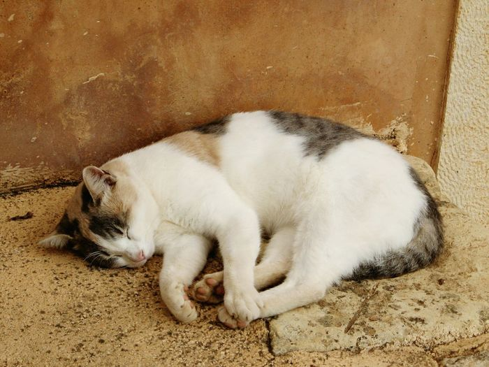 High Angle View Of Cat Sleeping At Home