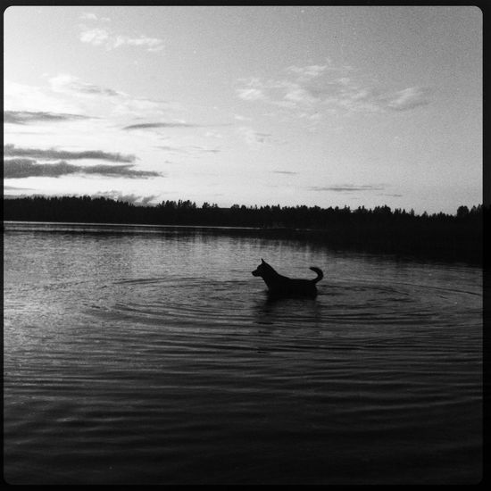 Dog Lake Water Blackandwhite Black & White Black And White Landscape Landscape_photography Landscapes Landscape_Collection Landscape Photography EyeEm Best Shots - Landscape Landscape #Nature #photography Landscape_lovers Landscape_captures IPhoneography IPhone Iphonephotography IPhone5 Iphonegraphy Iphonography IPhone Photography Iphotography IPhoneographer Iphonephoto