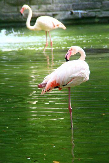 FlamingoEye Em Nature Lover Eye Em Best Shots Nature