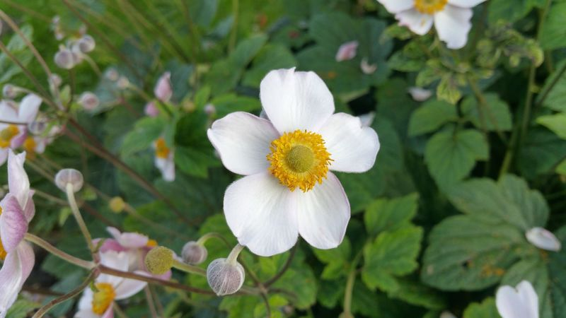Outdoors Close-up Beauty In Nature No People Flower in my garden Plant Nature Flower Head Summer Green Color White