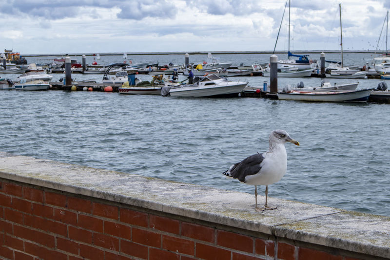 Vertebrate No People Day Water Nautical Vessel Bird Sea Animal Animals In The Wild Animal Themes Animal Wildlife Mode Of Transportation Transportation One Animal Seagull Perching Nature Sky Architecture Outdoors Boat Waterfront Portugal Olhao Brick Wall
