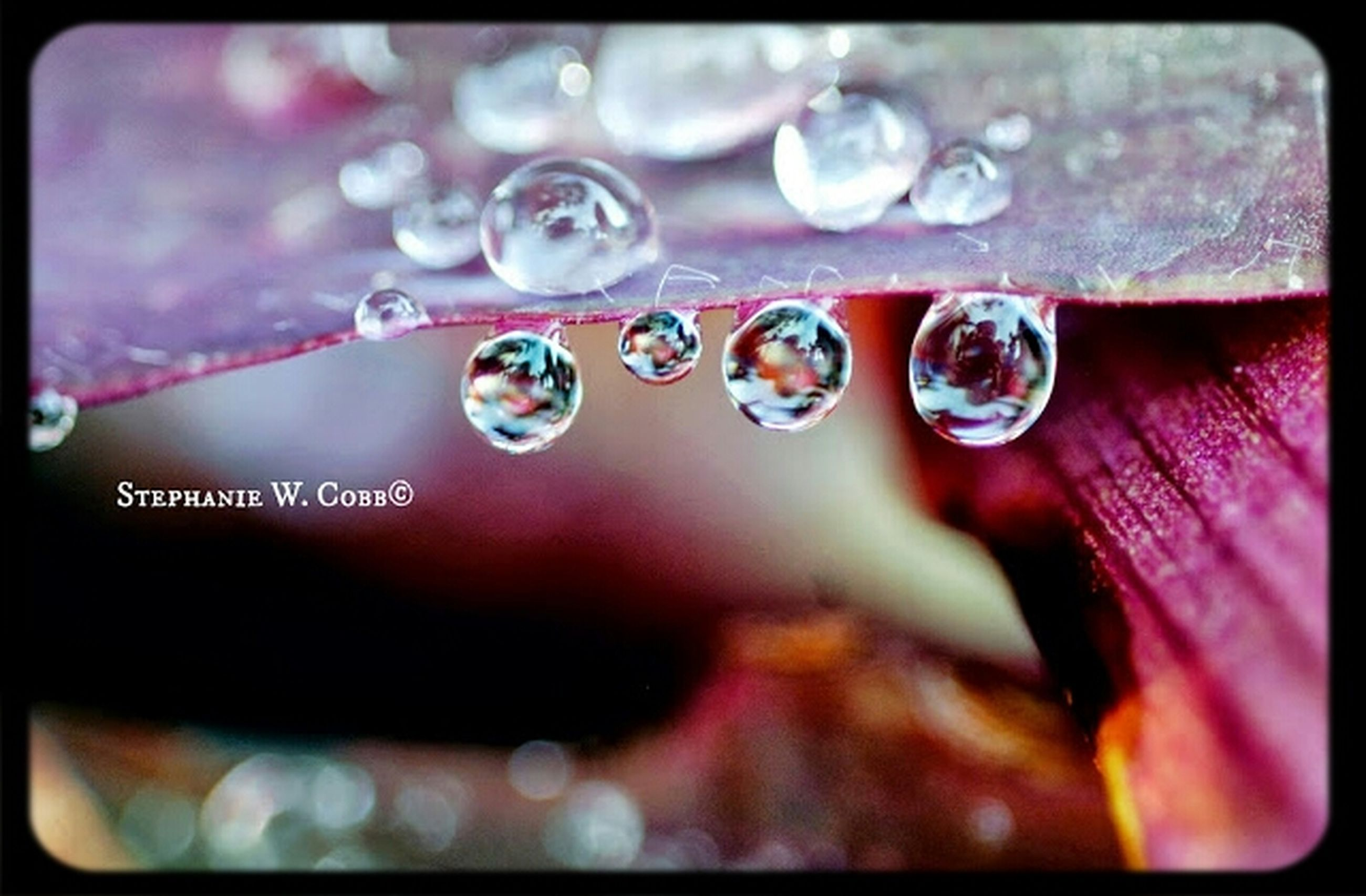 drop, close-up, water, indoors, transfer print, wet, focus on foreground, auto post production filter, selective focus, purity, transparent, glass - material, freshness, bubble, fragility, still life, droplet, detail, no people, table