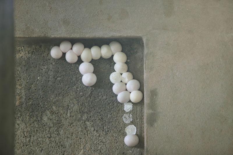 Gecko eggs on