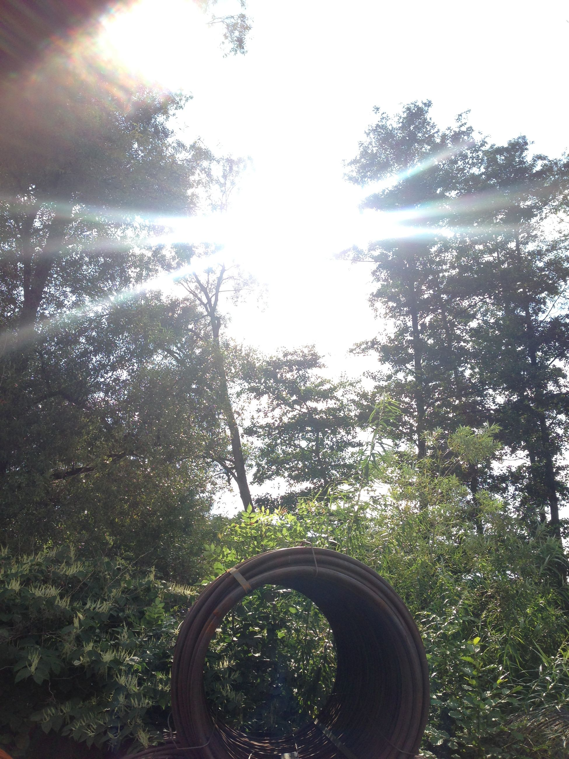 sun, sunbeam, tree, low angle view, sunlight, lens flare, bright, growth, sunny, nature, shiny, clear sky, tranquility, day, beauty in nature, streaming, sky, outdoors, no people, back lit