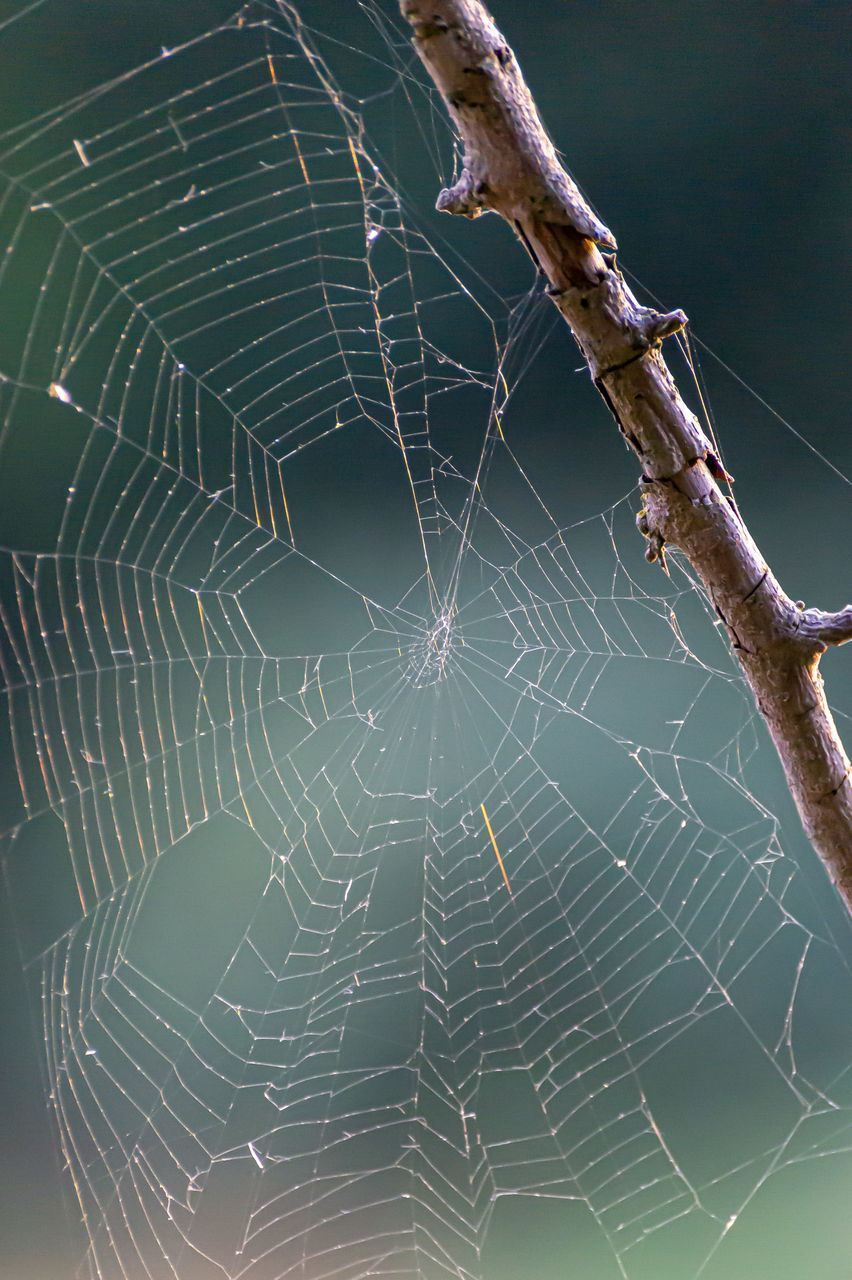 spider web, fragility, close-up, vulnerability, no people, focus on foreground, nature, beauty in nature, day, animal, natural pattern, animal themes, outdoors, complexity, plant, spider, animal wildlife, animals in the wild, pattern, invertebrate