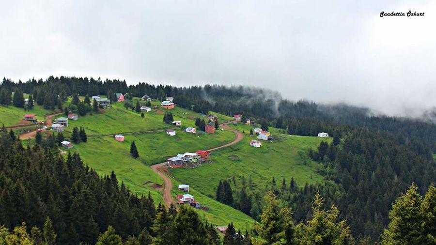 My Highlands Plateu Trabzon Landscape Nature Beauty In Nature Outdoors Tourism Fog Tree No People Akçaabat Serenity Turkey Objektifimden Relaxing Canonphotography
