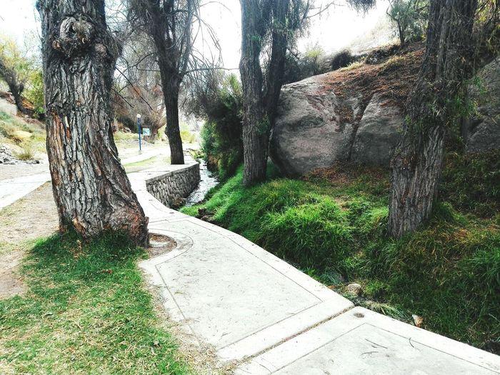 Trees growing by footpath