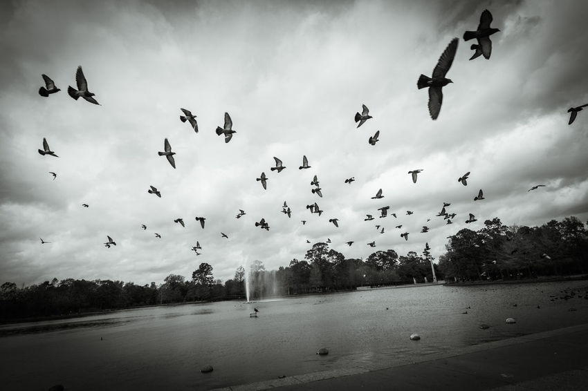 Animal Themes Animal Wildlife Animals In The Wild Beauty In Nature Bird Blackandwhite Cloud - Sky Day Flock Of Birds Flying Large Group Of Animals Mid-air Migrating Motion Nature Nature No People Outdoors Scenics Sky Water
