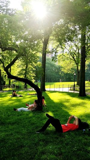lazy day at the park! Central Park CentralPark Central Park - NYC New York City New York ❤ Tree Sunlight Shadow Park - Man Made Space Lawn Grass Green Color