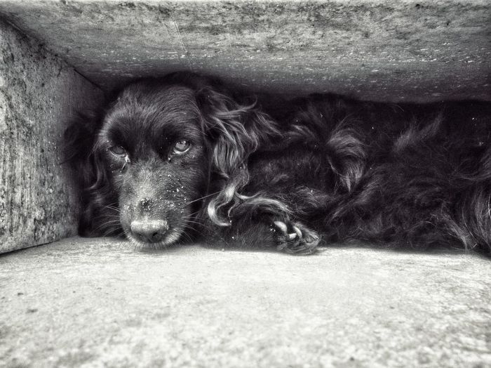 Nature EyeEm Selects Hungary Selected For Premium Bnw Bnw_collection Blackandwhite Honor10 Honor Pets Dog Lying Down Close-up Under Carpet Carnivora Domestic Cat Stray Animal Whisker Below Chihuahua Pit Bull Terrier Cat Rug Feline Tabby Ginger Cat Big Cat Kitten Tortoiseshell Cat
