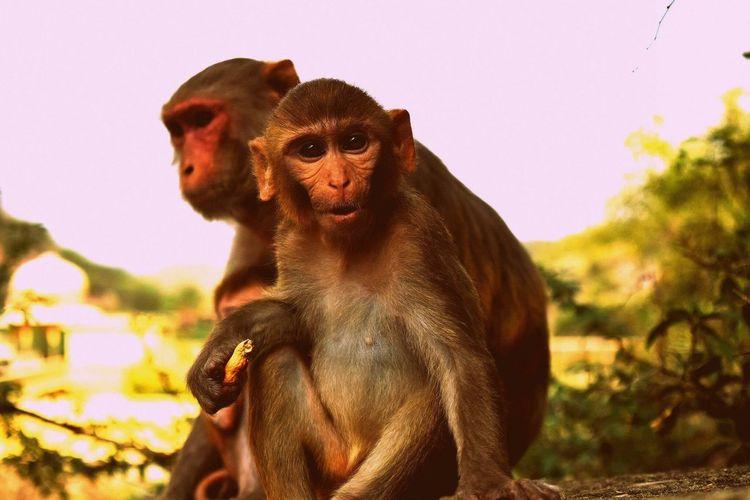 From my ventures at the abandoned monkey temple. India Jaipur Travel Wanderlust Monkey Wildlife