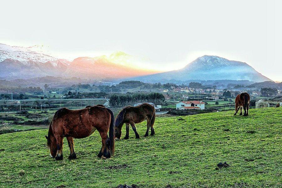 Percherones en La Tala en Llanes , Asturias Eyem Asturias Asturias_ig Llanes Asturias Nature