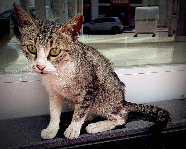 Enjoying Life Relaxing Yeşilyurt Malatya IPhoneography Cat