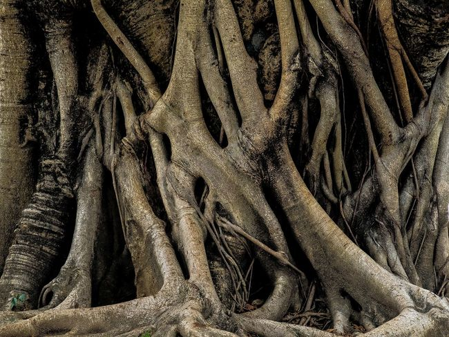 Backgrounds Full Frame Pattern No People Textile Textured  Close-up Close To Nature EyeEm Gallery EyeEm Best Shots Tranquil Scene EyeEm Best Shots - Nature Artistic Expression Art Is Everywhere A Moment Of Zen... Tree Trunk Art Tree Root Collection Beauty In Nature