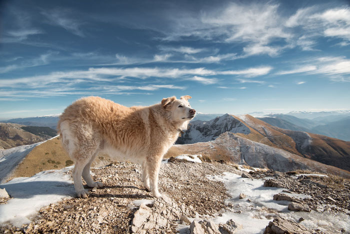 dog, pet, mountain, travel, tranquility scene, landscape, Abruzzo Sky Mountain Domestic Animals Pets Domestic Cloud - Sky Beauty In Nature Landscape Scenics - Nature Mountain Range Outdoors Dog Dog Love Clouds Parco Nazionale D'abruzzo Nature Nature_collection EyeEmNewHere EyeEm Best Shots EyeEm Nature Lover EyeEm Selects EyeEm Gallery Still Life Travel Tranquility