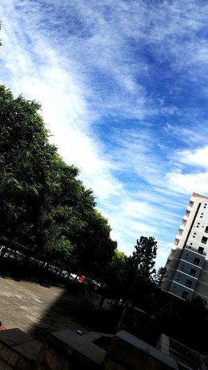 Tree Sky City