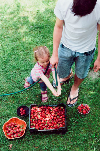 Siblings washing strawberries freshly picked in a garden Berry Child Childhood Family Farm Food Fresh Fruit Garden Girl Green Harvest Healthy Juicy Natural Nature Organic People Picking Raw Season  Sibilings Strawberries Summer Sweet