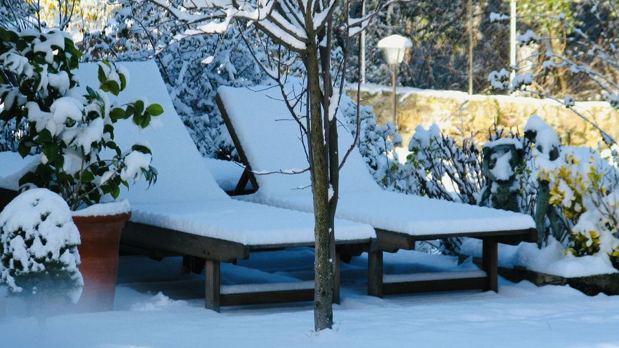Snow covered table and bench against trees during winter
