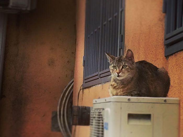 Portrait of cat sitting on window sill