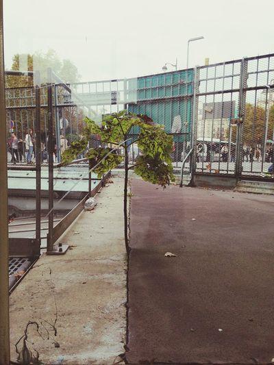 Trees Urban Nature Strength Nature Culture Paris Determination