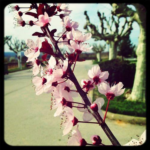 La Primavera la Sangre... Primavera