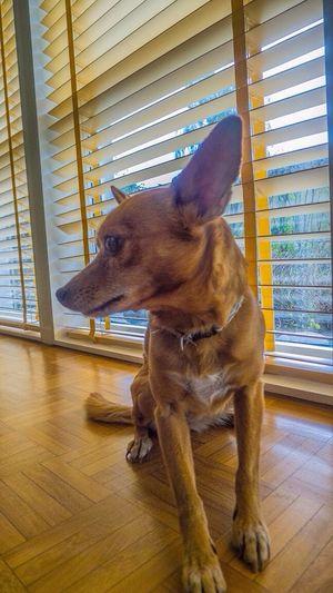 Modelling makes my bitch nervous Dog My Dog I Love My Dog Pet Photography