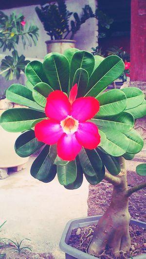 Creative Light And Shadow flower freshness