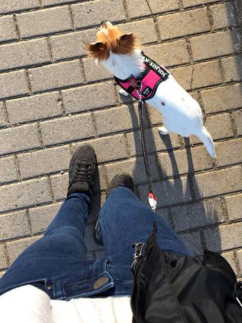Dog Chihuahua Biglove❤ Nikeair Nikelover Nikeairmax Nike ✔