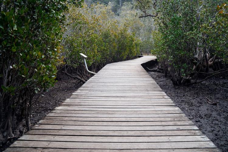 Boardwalk leading towards trees in forest