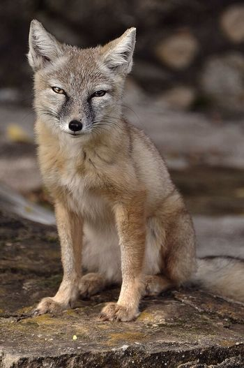 Photo Animal Streamzoofamily EyeEm Nature Lover