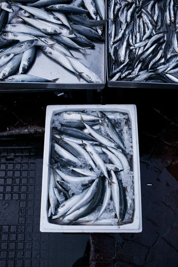 Fish on ice from the daily catch at the Athens fish market. Athens Athens Greece Fish Fish Market Food Market Greek Food No People Pescatarian Repetition Sardines Seafood SEAFOOD🐡 Still Life Sustainability Sustainable Fishing