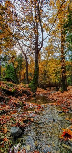 Trees growing by stream in forest during autumn