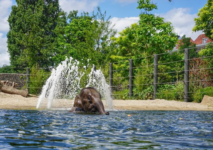2019 Niklas Storm Juli Elefant Zoo Tree Water Spraying Motion Swimming Water Slide Sky Water Park Fountain Animals In Captivity