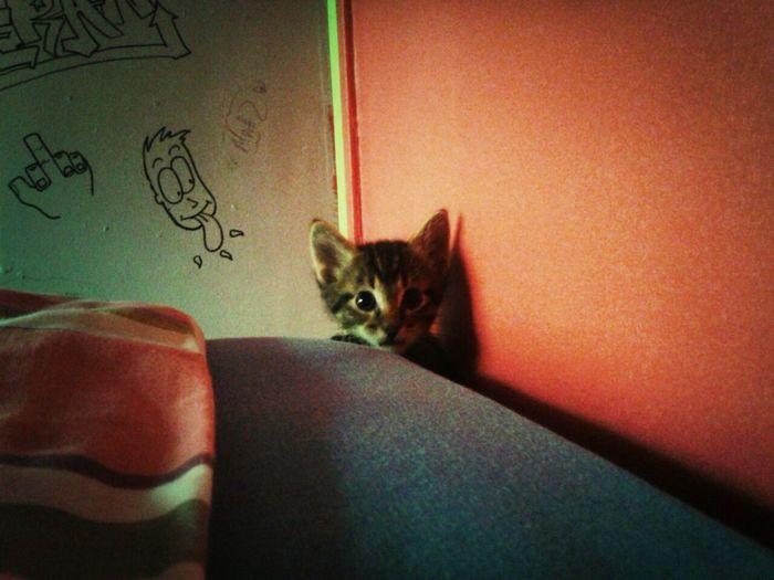 hello kittyyy!! Kitten #adorable
