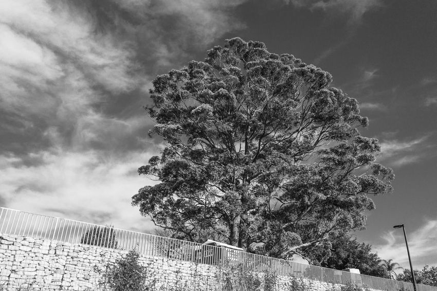 The crown of tree Light And Shadow Black And White Monochrome Cloud - Sky Sky Low Angle View Plant Tree Nature Growth Day No People Outdoors Beauty In Nature Tranquility Overcast Pattern Branch Silhouette