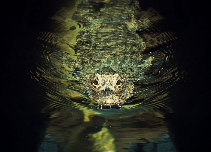Portrait of a turtle in a water